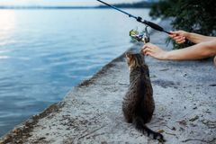 Cat and fisherman with fishing rod wheel. Cat sits and waits on the shore, fisherman with fishing rod wheel royalty free stock photography