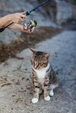 Cat and fisherman with fishing rod wheel. Cat sits and waits on the shore, fisherman with fishing rod wheel stock photography