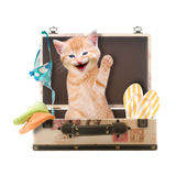 Cat sits waving and laughing in suitcase Royalty Free Stock Images