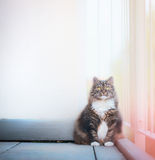 Cat sits at white wall and looking at the camera. Cat on a balcony Royalty Free Stock Photography
