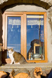 The cat sits at a window Stock Images