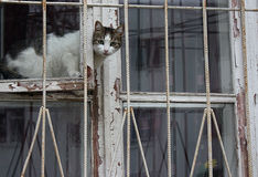 The cat sits on the window and looks outside. The cat sits on the window and looks outside Stock Images