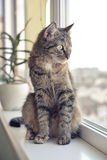A cat sits on a window sill. And looks out the window Stock Photos