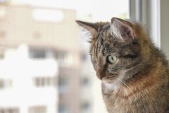 A cat sits on a window sill. And looks out the window Royalty Free Stock Photos