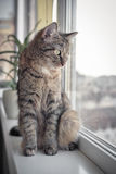 A cat sits on a window sill. And looks out the window Stock Photo