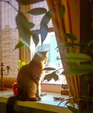 A cat sits on a window in a sunny room. The cat sits on the window in a sunny room. Interior Royalty Free Stock Image