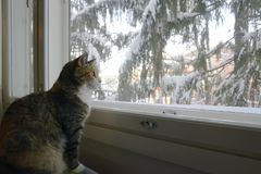 Cat sits by the window in winter stock photography