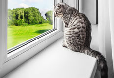 Cat sits on a windowsill Royalty Free Stock Photo
