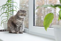 Cat sits on the windowsill and looks out the window. Royalty Free Stock Photography