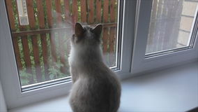 Cat sits on the windowsill and looks out the window stock video footage