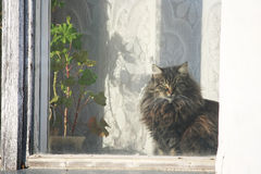 Cat sits on a windowsill  and looks window. Fluffy cat, illuminated by the sun, sitting at the window next to the geranium plant in a pot and looking window Stock Photo