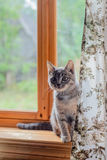 Cat sits on windowsill Stock Photo