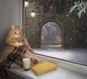 Cat on windowsill winter. The cat sits on the windowsill. Outside the window is winter stock image