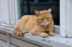 Cat sits on a windowsill Stock Photo