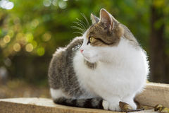Cat sits on wood planks with fallen leaves Royalty Free Stock Images