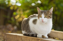 Cat sits on wood planks with fallen leaves in autumn Royalty Free Stock Image