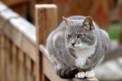 Free Cat Sitting Stock Image - 27767811