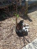 Cat Sitting al sole Immagini Stock