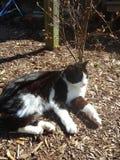 Cat Sitting al sole Fotografia Stock Libera da Diritti