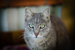 Cat sitting alone. And staring at you Royalty Free Stock Images