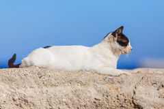 Cat sitting in ancient stone masonry wall fencing at port of Rhodes Stock Photos