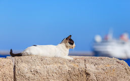 Cat sitting in ancient stone masonry wall fencing at port of Rhodes Royalty Free Stock Photo