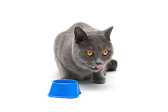 Cat sitting around the bowl on a white background Stock Photos
