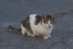 Cat sitting on the asphalt road in the shade. Closeup stock image