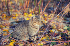 The cat is sitting in autumn garden Royalty Free Stock Photos