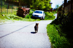 Cat sitting back to camera on the road Royalty Free Stock Photography