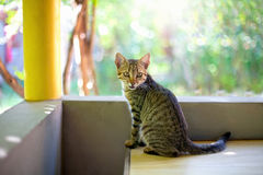 Cat sitting at the balcony. Cat sitting on a table on the balcony royalty free stock images