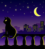 Cat in midnight on the balcony Royalty Free Stock Photography