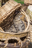 Cat sitting in a basket, looking to a side Royalty Free Stock Photography