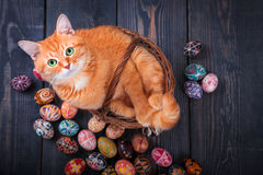 Cat sitting in the basket on a wooden background with Easter eggs. Royalty Free Stock Images
