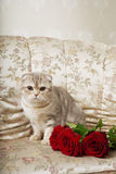 Cat sitting on a beautiful vintage couch royalty free stock photography