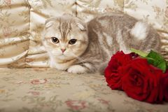 Cat sitting on a beautiful vintage couch Stock Image