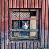 Cat sitting behind bars Royalty Free Stock Photography