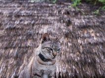 Cat Sitting Behind The Cottage fotos de stock