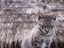 Cat Sitting Behind The Cottage fotografia de stock