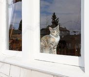 Cat sitting behind the window. Stock Photos