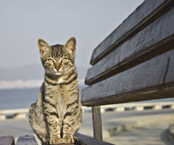 Cat sitting on bench Royalty Free Stock Photos