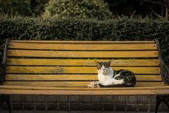 Cat sitting on a bench Stock Images