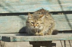 Cat sitting on a bench Royalty Free Stock Photo