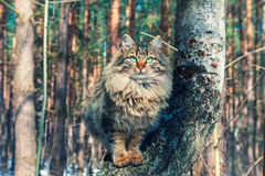 Cat sitting on a birch tree Royalty Free Stock Photography