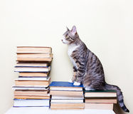 Cat sitting on the books. Concept studies, education Royalty Free Stock Image