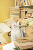 Cat sitting among books, showing its teeth. Selective focus. Royalty Free Stock Photography