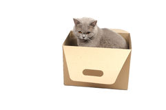 Cat sitting in box Royalty Free Stock Image
