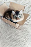 Cat sitting in a box Royalty Free Stock Image