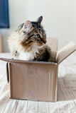 Cat sitting in a box Stock Image