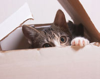 The cat is sitting in a box. Stock Photo
